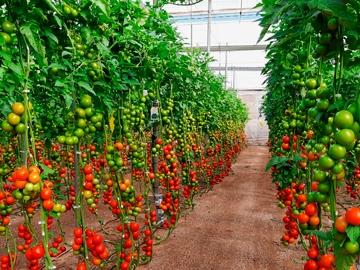 Greenhouse indoor irrigation